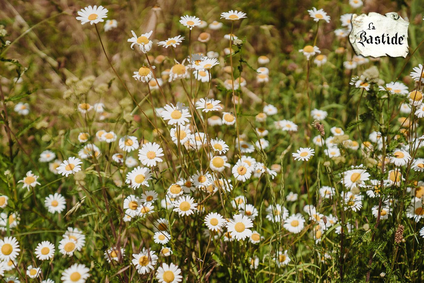 La-Bastide website sitemap sfeerfoto vakantiedomein bloemen margrieten