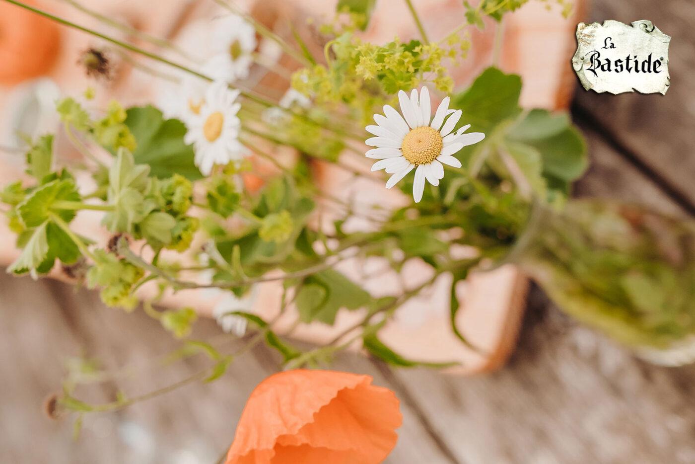 Vakantiedomein La-Bastide nieuwsbrief sfeerfoto bloemen